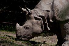 Free Rhino Eating Royalty Free Stock Image - 14357446