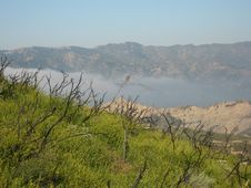 Free Undergrowth After Fire In Southern California Royalty Free Stock Photo - 14358285