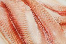 Free Fish Royalty Free Stock Photo - 14359125