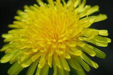 Free Dandelion Stock Image - 14359201