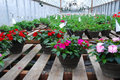 Free Hanging Baskets Royalty Free Stock Photo - 14361875