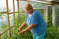 Free Woman Is Working Hard In A Greenhouse. Royalty Free Stock Photo - 14363195