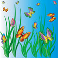 Free Butterflies Royalty Free Stock Image - 14363906