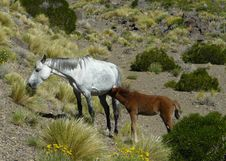Free Horses (Patagonia) Stock Images - 14360294