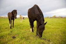 Free Horses In A Field Stock Image - 14361121