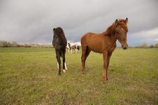 Free Sorrel Horse With Others In Background Stock Image - 14361151