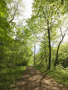 Trail In Spring Park Royalty Free Stock Image
