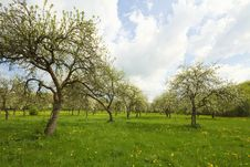 Free Blossoming Orchard Stock Image - 14361161
