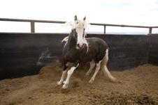 Free Stallion In Pen Royalty Free Stock Photos - 14361168