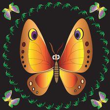Free Orange Butterfly. Stock Photo - 14363770