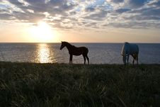 Free Horses And The Sunset Royalty Free Stock Photography - 14363957