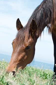 Free Closeup Horse Eating Grass Royalty Free Stock Photography - 14364027