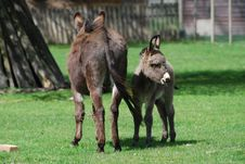 Free Donkey And Baby Royalty Free Stock Image - 14366686