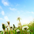 Free Meadow Royalty Free Stock Photos - 14377448