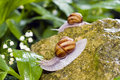 Free Snail Stock Photos - 14378173