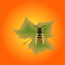 Illustration-bee Sitting On A Maple Leaf Stock Images