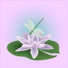 Free Illustration-dragon-fly On The Water-lily Stock Images - 14370764