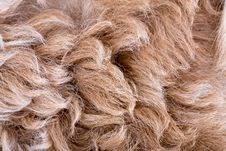 Free Sheepskin Texture Royalty Free Stock Images - 14371949
