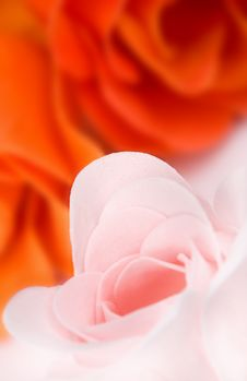 Free Macro Of Pink Soap Foam Rose Royalty Free Stock Images - 14372189