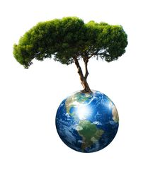 Free Earth And The Tree Royalty Free Stock Images - 14372569