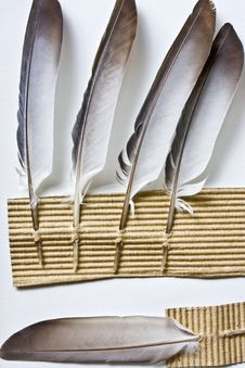Free Feathers And Cardboard Stock Photos - 14373393