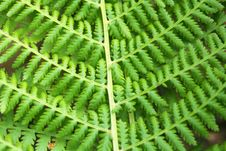 Free Fern Royalty Free Stock Photo - 14373975