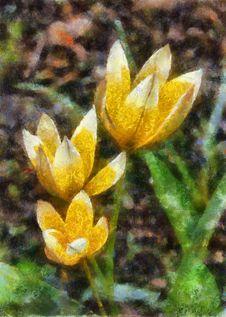 Free Illustration, Three Yellow Tulips Royalty Free Stock Images - 14374359