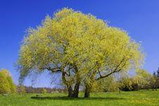 Free Flowering Tree Stock Photography - 14374492
