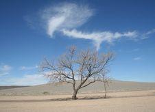 Free Tree In Idaho Desert Stock Image - 14374951