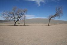 Free Trees In Idaho Desert Stock Image - 14374971