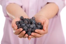 Free Young Female Hands Full Of Blueberries Royalty Free Stock Image - 14375786