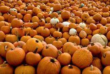 Free Pumpkin Patch Stock Image - 14375951