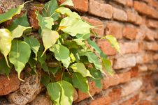 Free Chiang Mai Walls Royalty Free Stock Photo - 14376525