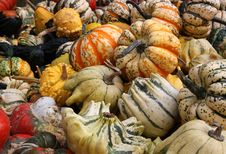 Free Pumpkins And Gourds Royalty Free Stock Photo - 14376845