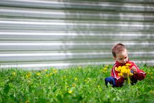 Free The Boy Collects Dandelions Royalty Free Stock Photo - 14377125