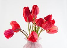 Free Tulips Stock Photography - 14377352