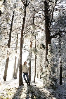 Free Winter Wonderland Stock Photography - 14377922