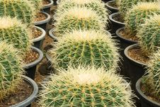 Free Cactus Stock Photo - 14378240