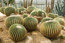 Free Cactus Stock Photo - 14378320