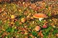 Free Mushrooms Royalty Free Stock Images - 14389809