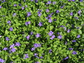 Free Violet Flowers Royalty Free Stock Images - 14389979