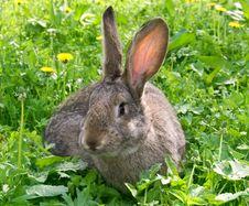 Free Rabbit Royalty Free Stock Photography - 14380047