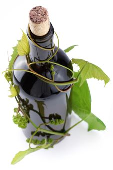 Bottle Entwined With Vine Royalty Free Stock Photos