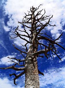 Free Dead Tree Stock Photos - 14380913