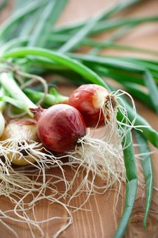 Free Green Onion Royalty Free Stock Images - 14381479