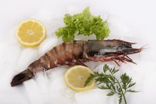 Free King Prawn On Ice Stock Photography - 14381482