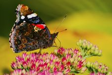 Free Red Admiral From The Side Stock Photos - 14381643