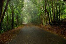 Free Misty Road Stock Image - 14381651