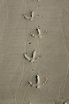 Free Bird Steps In Wet Sand Stock Photo - 14381850
