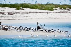 Free Terns And Pelicans Royalty Free Stock Photos - 14384108